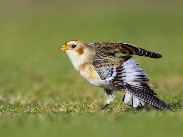 Pajaro-a-punto-de-volar