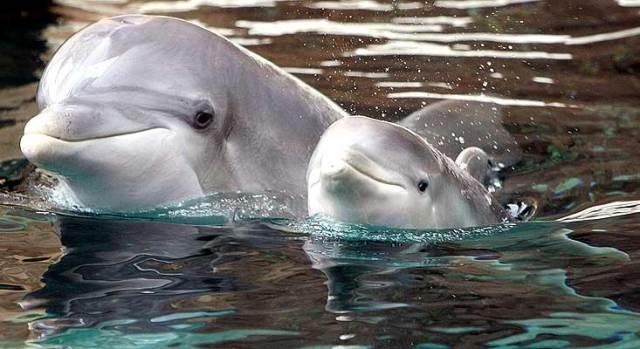 delfines-c