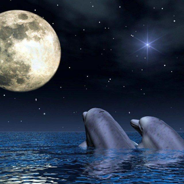 delfines-h