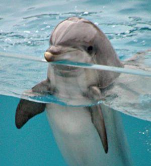 delfines-j