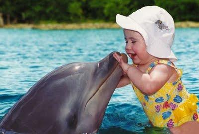 delfines8