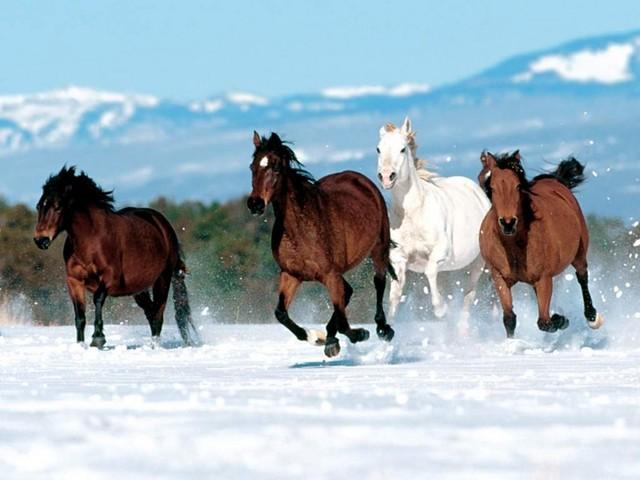 caballos_corriendo_en_la_nieve
