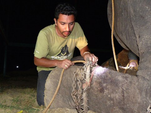 crying-elephant-raju-rescued-chained-50-years-7