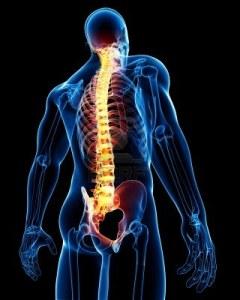 Spine-anatomy