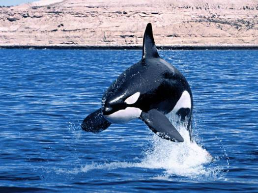 wallapapers_whales-ballenas (20)