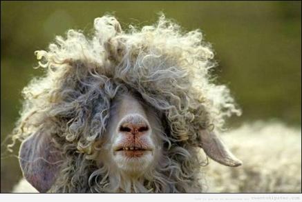 cabra-hipster-pelo-largo