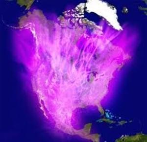 americallama-violeta